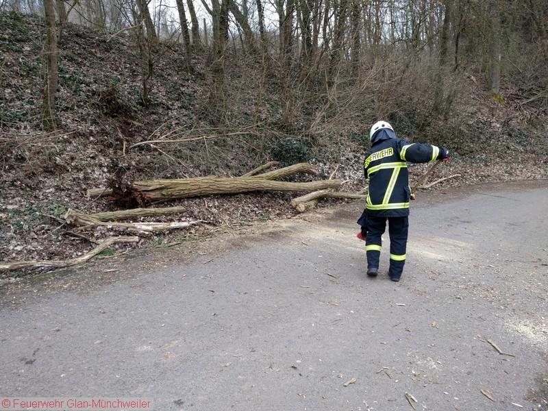 Umgestürzter Baum, Glan-Münchweiler