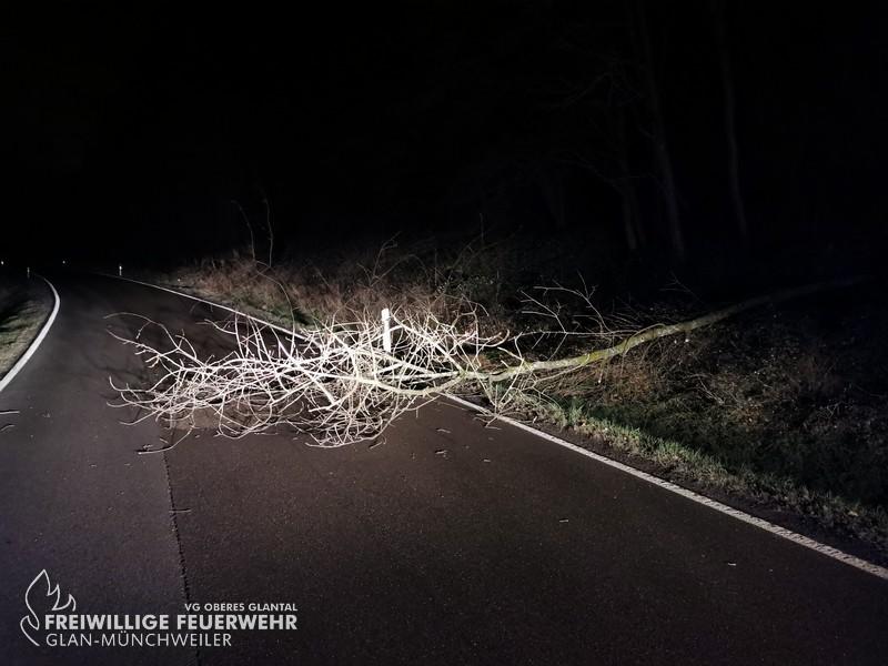Umgestürzter Baum, L358